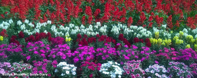 Noida Diary: Pushpotsav - Greater Noida Flower Show 2016