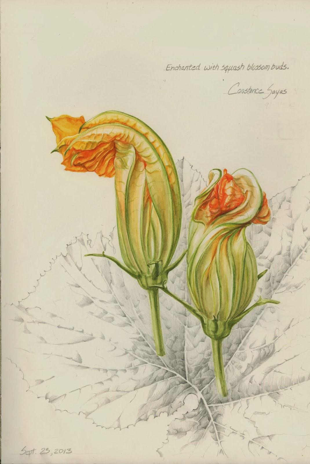 Botanical Illustration Diploma In Illustration