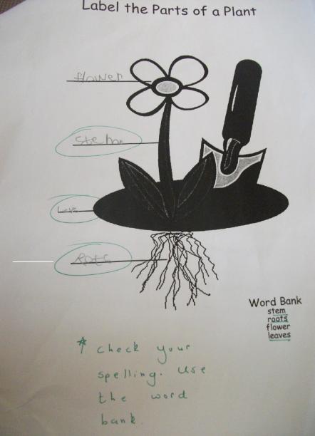 أجزاء النبات وحفظها بسرعه للطفل Parts Of A Plant