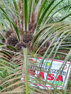 jenis pupuk kelapa sawit terbaik