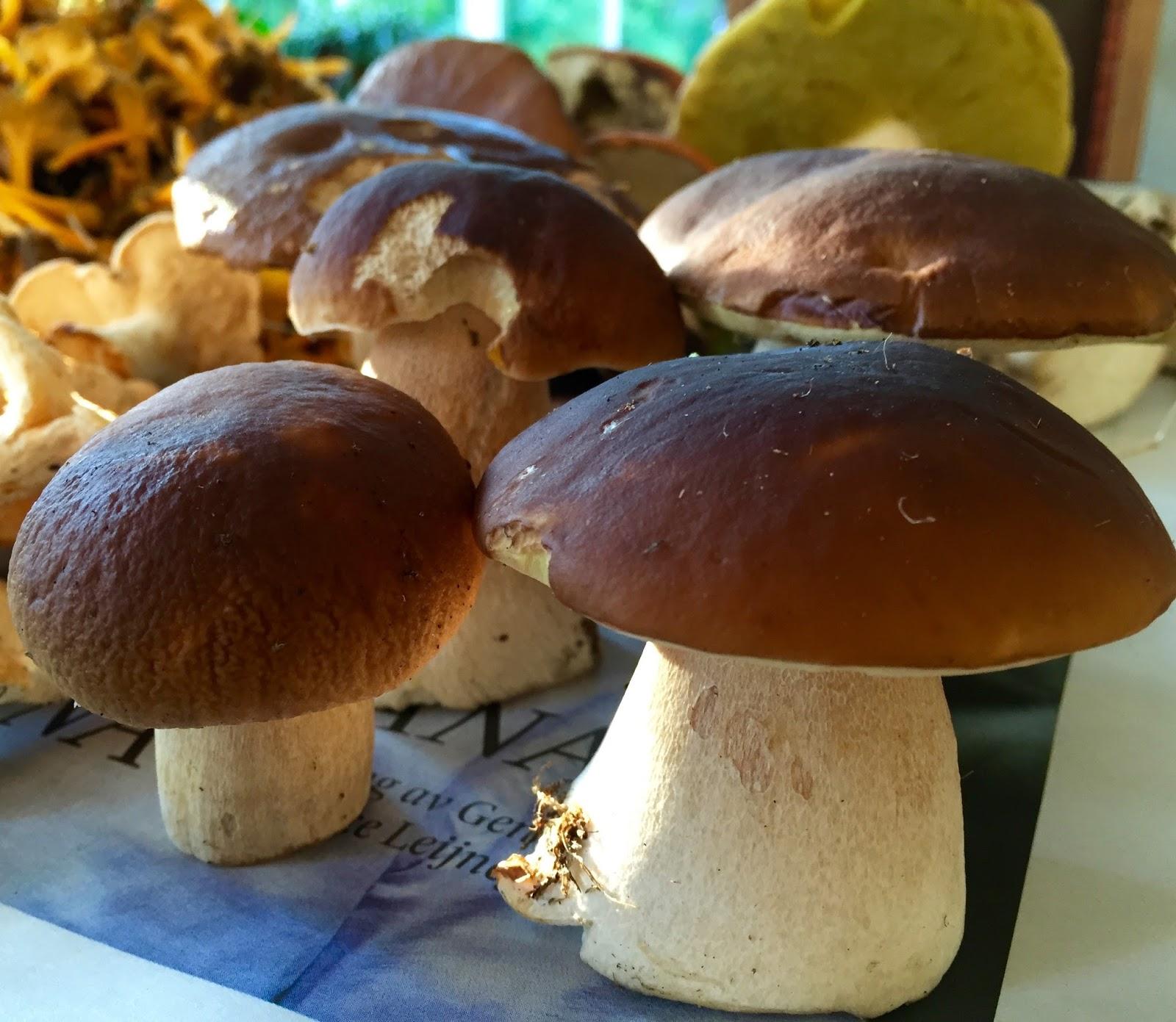 Fagerdala trädgård: Efter regn kommer - svamp!