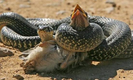 蛇、鳥生死搏鬥之感觸
