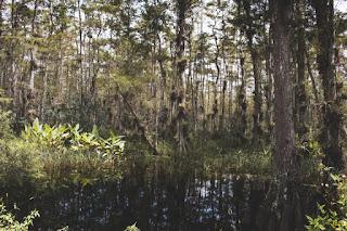 Un étang dans la forêt