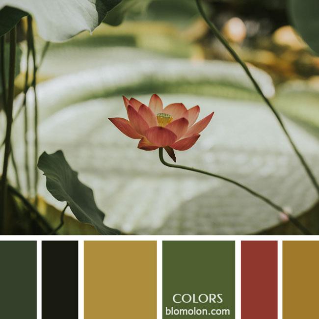 variedad_en_color_paletas_de_colores_12