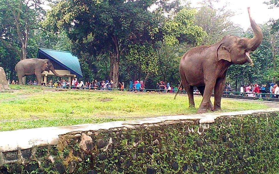 Tempat Wisata Kebun Binatang Ragunan di Jakarta