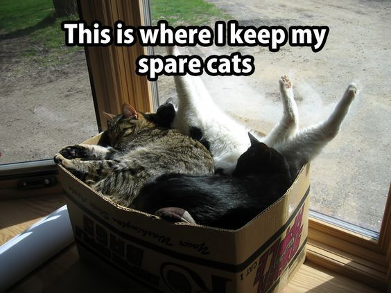 Funny cat meme - this is where I keep my spare cats