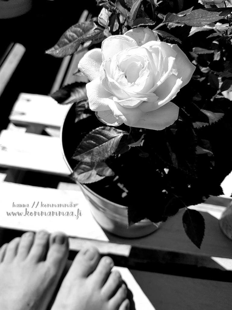 mustavalkoinen kuva ruusu ja varpaat