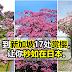 到新加坡17处赏樱,让你秒如在日本。