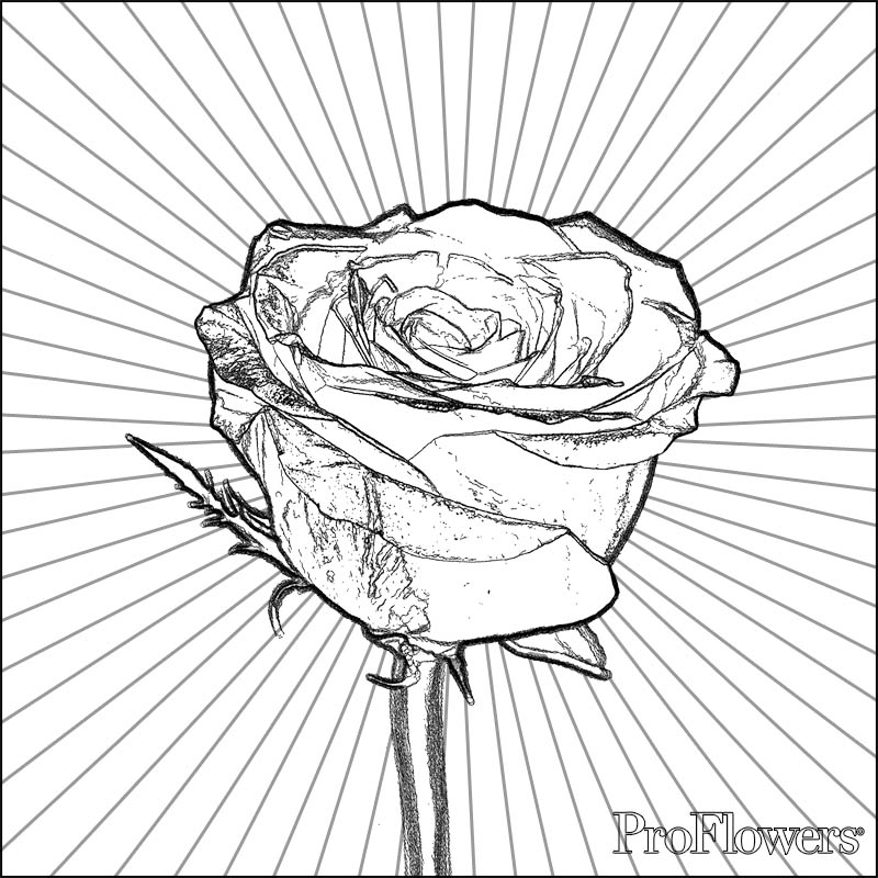 Coloring Pages for Kids: Rose Coloring Pages for Kids