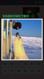 человек зимой знакомится с медведем через окно машины на снегу