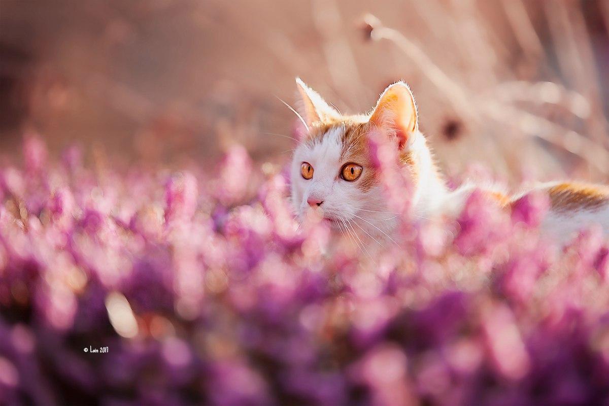 Весна и котик