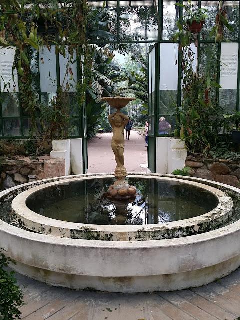 Plantas insetívoras no Jardim Botânico do Rio