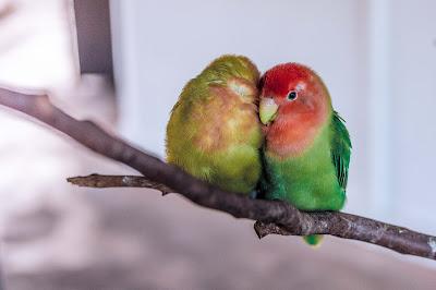 dos pájaros juntos en una rama