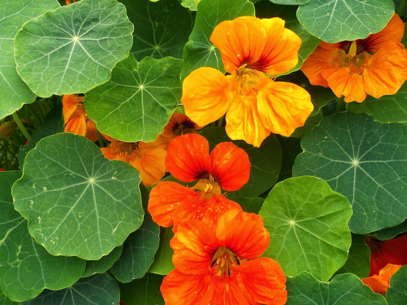 Цветы каталог садовых с названиями 16