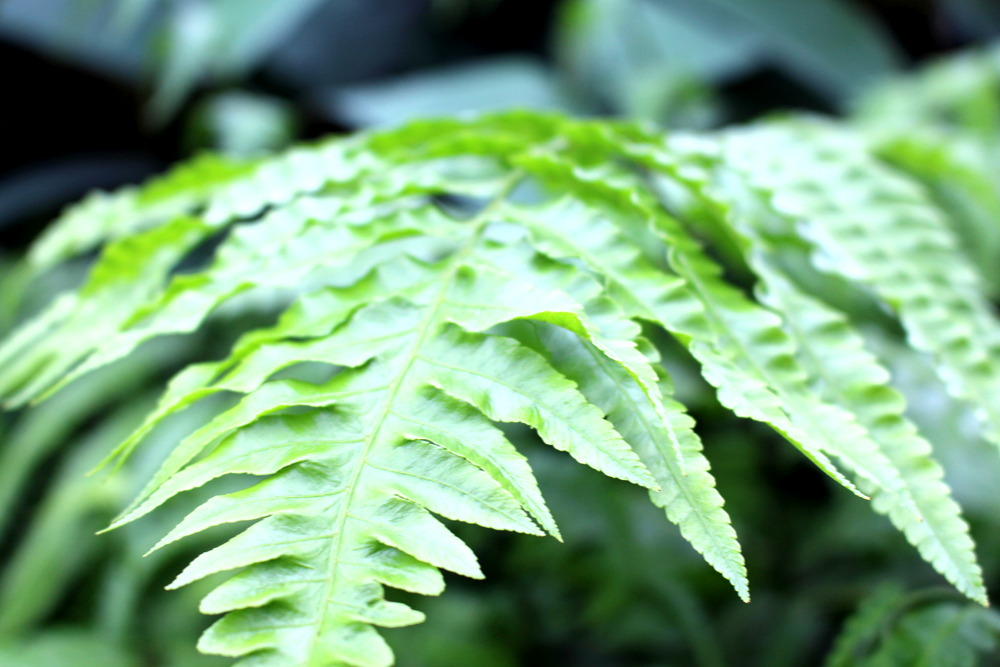 Ferns at Kew Gardens in Spring - London lifestyle blog