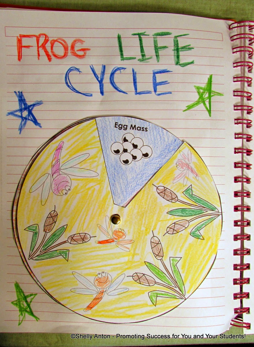 Frogs Life Cycle Interactive Notebook Activity