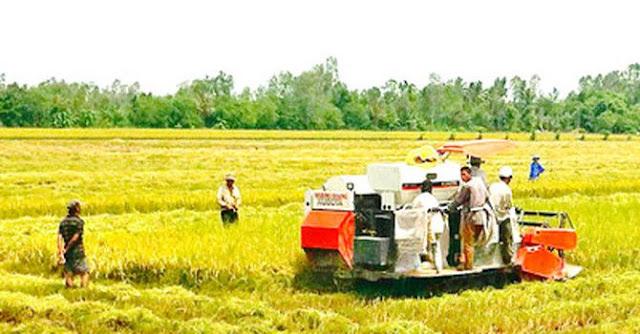 Liệu người nông dân có bị điêu đứng khi chính phủ tạm dừng xuất khẩu gạo