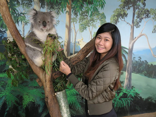 taking a picture with the koala,  Maru Koala and Animal Park, melbourne, australia