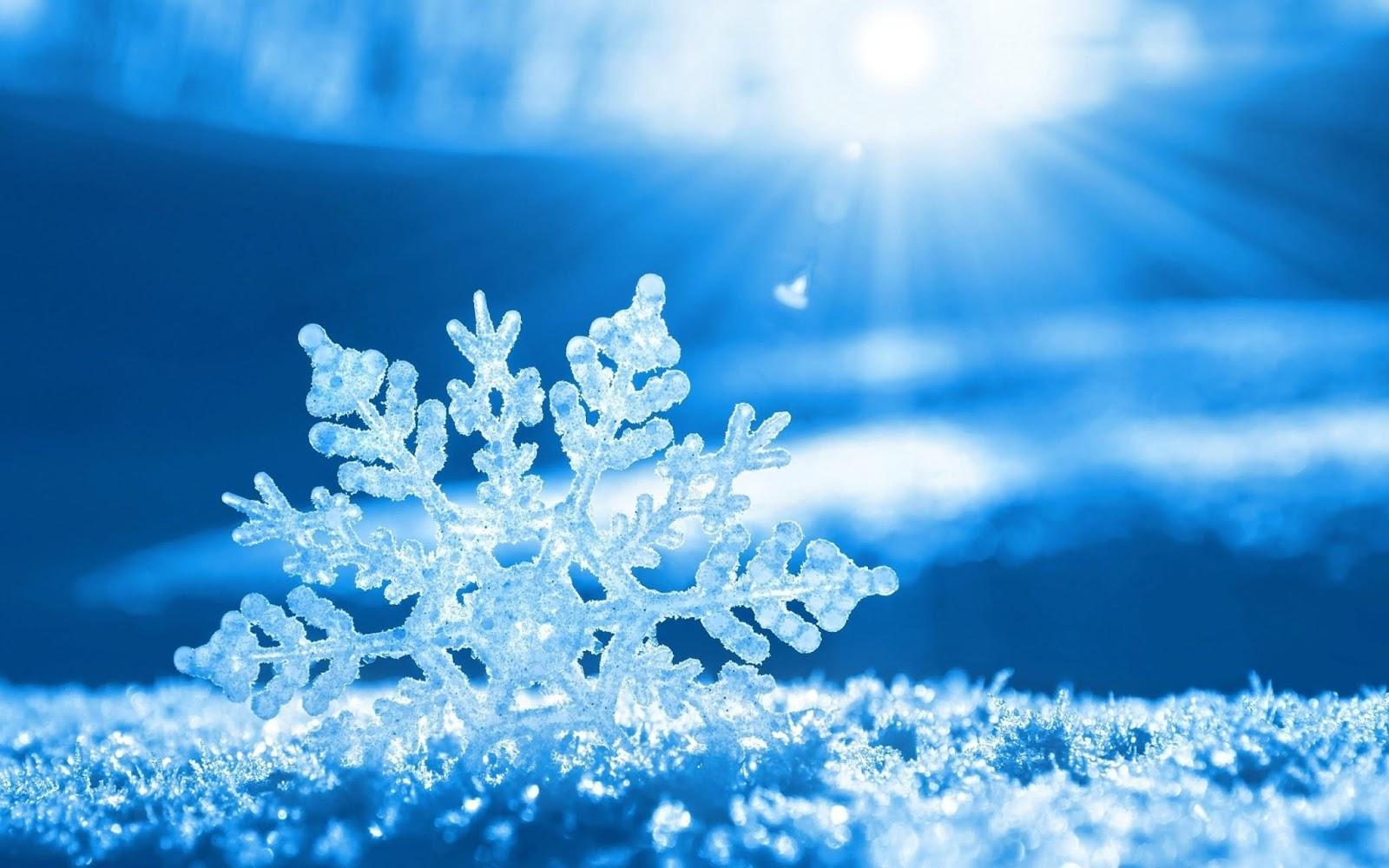 hình nền hoa tuyết long lanh trong ánh nắng