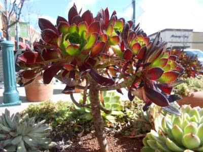 spiritual awakening, spiritual growth, succulent, plant