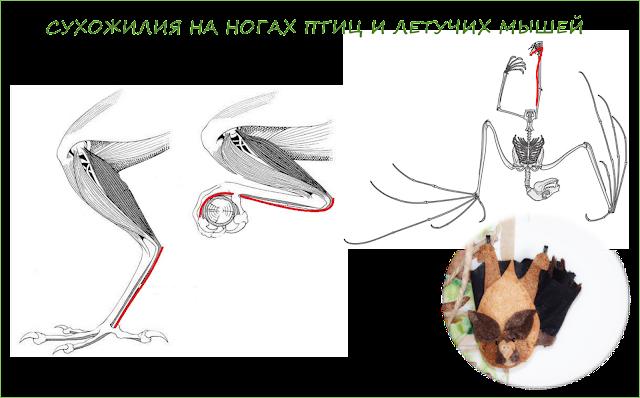 pochemu-letuchie-myshi-spjat-vniz-golovoj-magija-biologii