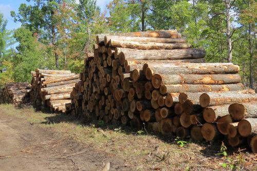 piles of oak logs