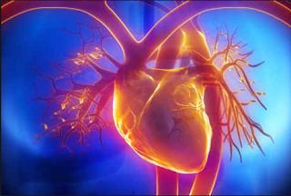 bagian bagian jantung fungsi dan cara kerjanya