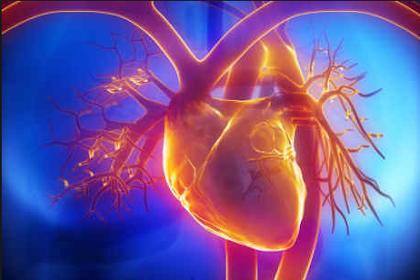 Bagian-Bagian, Fungsi Dan Cara Kerja Jantung