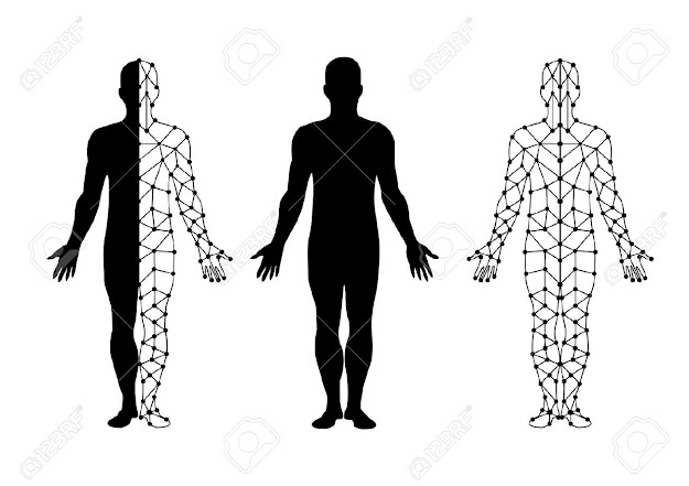 Body Vector Body Isolate And Body Mesh Illustration Vector Illustration