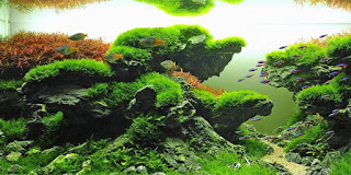 taiwanese aquascape