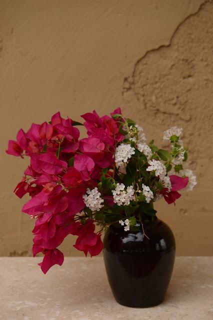 monday vase, small sunny garden, desert garden, bougainvillea, lantana, amy myers, photography, stoneware, pottery, ceramics