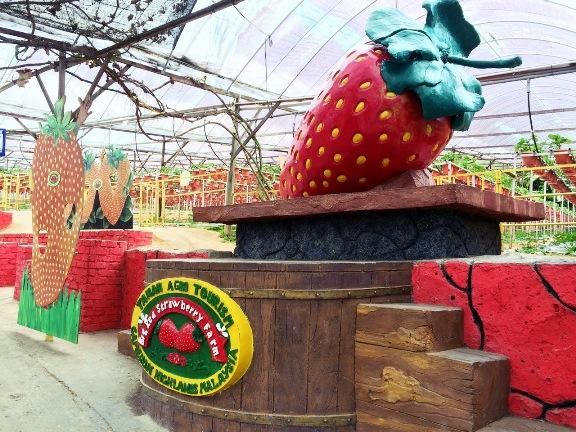 Tempat menarik di Cameron Highland Big Red Strawberry Farm