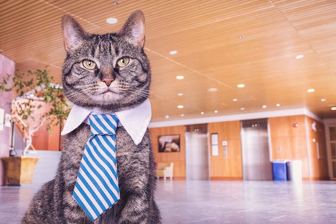 This Cat is Dandy - A Marketing Footnote