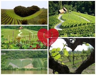 foto vigne cuore vino