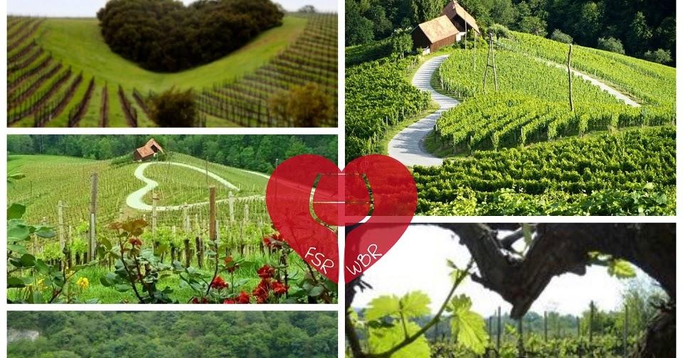 Il romanticismo del Vino e del Vignaiolo