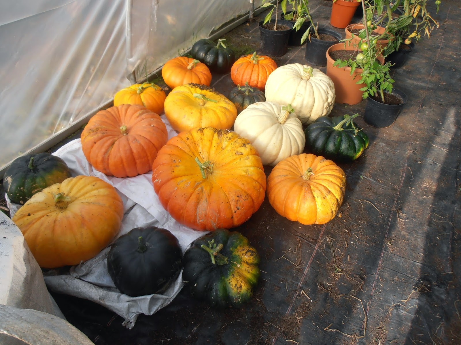 FoodSmiles St Albans: 40 Things To Do With A Pumpkin (Or A ...