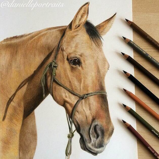 11-Horse-Commission-Danielle-Fisher-Realistic-Animal-Portrait-Pastel-Drawings-www-designstack-co
