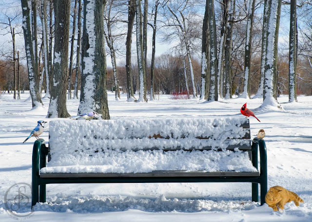 a bench covered in winter snow at Tudhope Park, Orillia