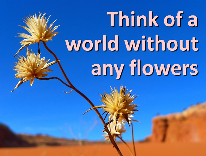 think of a world without any flowers godsongs net