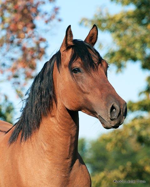 quarter horse head pictures - photo #34