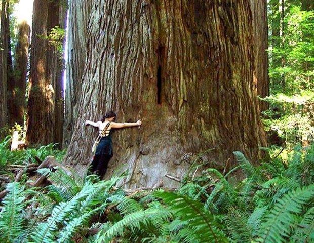 Energjia e Pemës: si Pemët na ndihmojnë që të Shërohemi