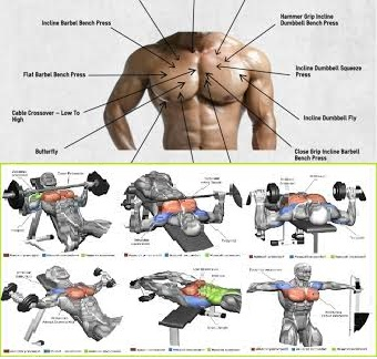 The Best Chest Workout Www Bodybuilding110 Com