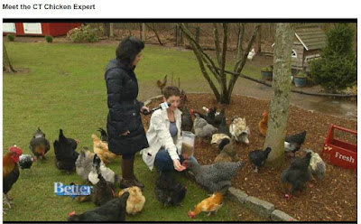 Meet the Connecticut Chicken Expert, WFSB Channel 3's Better Connecticut