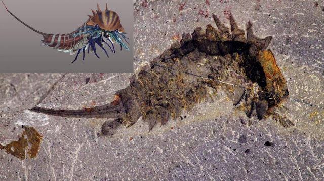 A 508-million-year-old Sea Predator