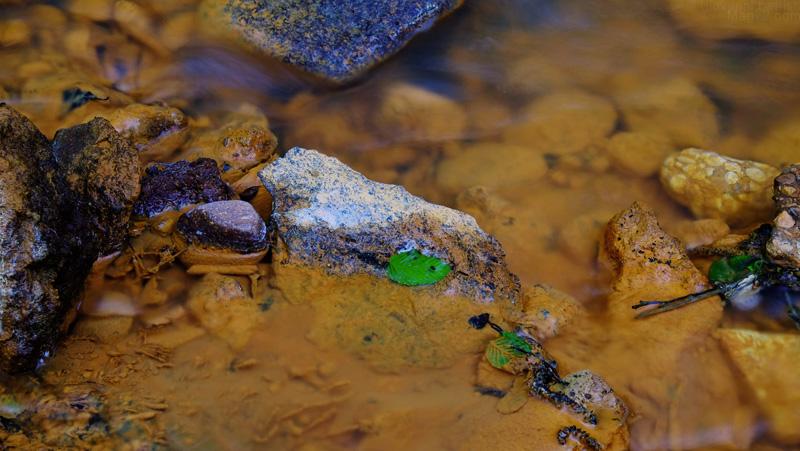 Acqua rossa con foglia verde alla Cascata della Diosilla