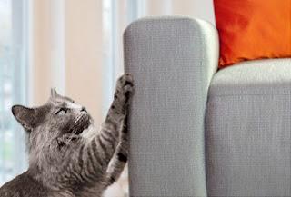 Mengenal Teritori Kucing