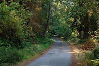 Cornet Bay Road