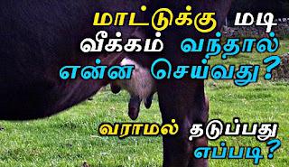 கறவை மாடு வளர்ப்பு பயிற்சி, மாடு வளர்ப்பு முறைகள், karavai maadu paramarippu, kalnadai valarpu tamil, Madi veekam iyarkai maruthuvam