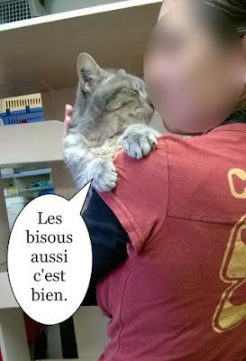 Un chat porté dans les bras qui fait des bisous.