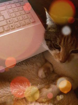 Il est comme naturel que je vous présente ma fidèle collaboratrice à qui je dois une grande partie de mon inspiration. Elle s'appelle Chatounette et elle est le chat nomade le plus inspirant que je connaisse.